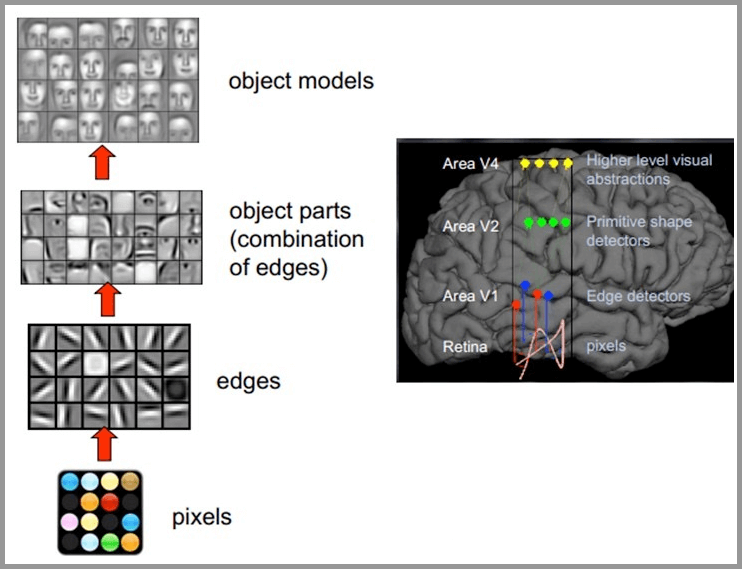 人类大脑看图的原理