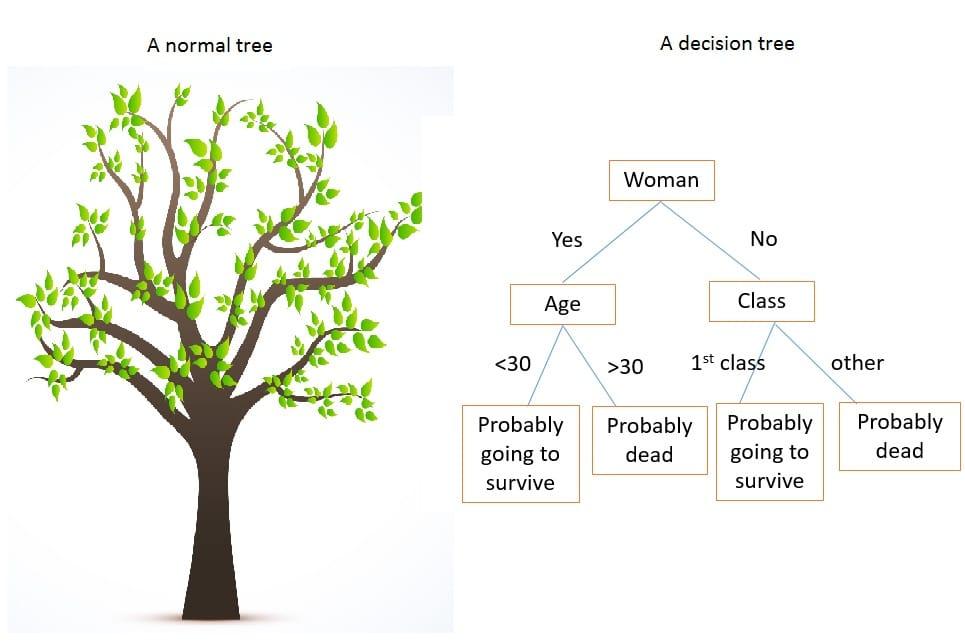 决策树示例